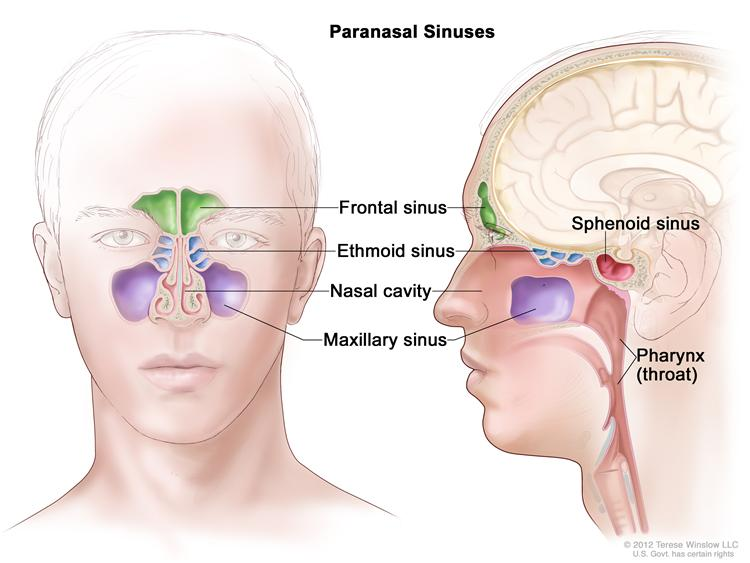 Specialist ENT FUNCTIONAL ENDOSCOPIC SINUS SURGERY FESS