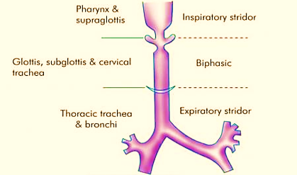 Specialist ENT Screenshot 2020 12 01 larynx 2020 new bs almost final edted 8 9 2020 2
