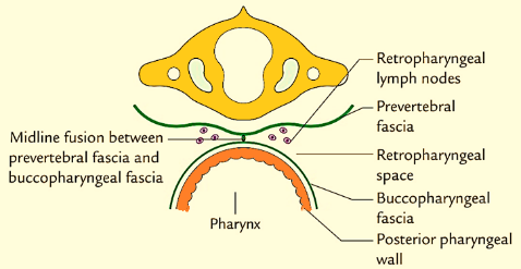 Specialist ENT Screenshot 2020 12 02 ORAL CAVITY AND PHARYNX SEMIFINAL BS docx 1