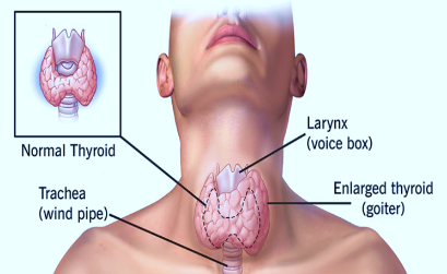 Specialist ENT Screenshot 2020 12 03 ORAL CAVITY AND PHARYNX SEMIFINAL BS